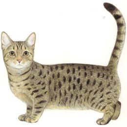 猫種ピン No.33 マンチカン